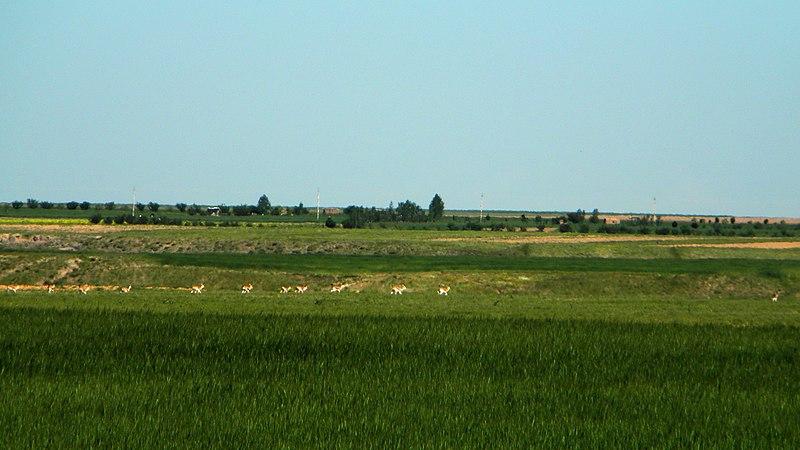File:آهوان دشت سهرين - panoramio.jpg