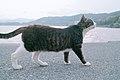 ネコと海 - panoramio.jpg