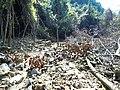 上山途中1 - panoramio.jpg
