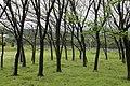 衢州服务区旁边的树林 - panoramio (2).jpg