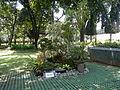 05593jfMidyear Orchid Exhibits Quezon Cityfvf 23.JPG