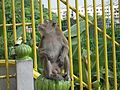 06 Monkey Looking Back (9123132693).jpg