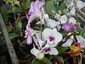 0917jfMaharlika Highway Resorts Orchids Handicrafts San Rafael Bulacanfvf 11.JPG