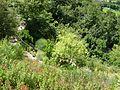 2008 07 Botanical Garden Meran 70560R0194.jpg