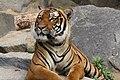 2012-09-15 Tierpark Berlin 34.jpg