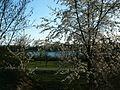 20120401Kirschbluete Altlussheim5.jpg