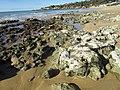 2018-01-17 Rocks and tide pools on Praia da Oura (east) 1.JPG
