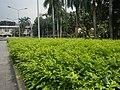 22Mehan Garden Ermita Manila Alexander Pushkin 18.jpg