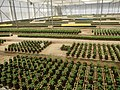 5904Farm Ready Seedling Facility East West Seed Philippines 02.jpg