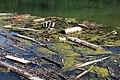 87764 Legau, Germany - panoramio (63).jpg