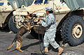 8th MP's MWD teams earn certification, enhance readiness 150506-A-CD129-417.jpg