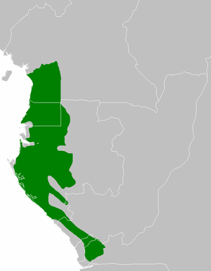 Atlantic Equatorial coastal forests - Atlantic Equatorial coastal forests