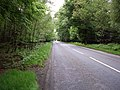 A Forest Road - geograph.org.uk - 446250.jpg