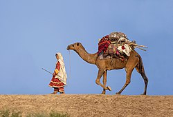 A Pākistani woman is traveling with her camel in Balochistan, Pakistan