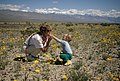 A banner year for wildflowers (40248749214).jpg