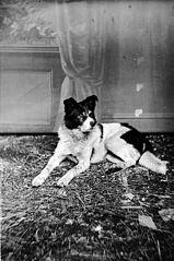 A dog (W Evans)