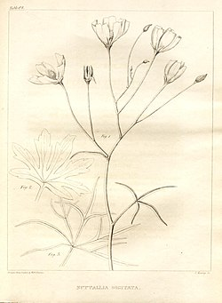A flora of North America (Table 62) (7361655568).jpg