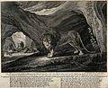 A male lion standing outside a cave with four other male lio Wellcome V0021015.jpg