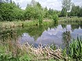 A quiet corner of the London Wetland Centre - geograph.org.uk - 1918669.jpg