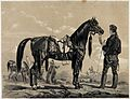 A soldier is holding a thoroughbred arab horse by its reins. Wellcome V0021740.jpg