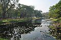 Acharya Jagadish Chandra Bose Indian Botanic Garden - Howrah 2011-01-08 9777.JPG
