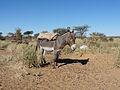 Adrar-Donkey (2).jpg