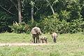 African Elephant Family (6841415944).jpg
