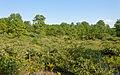 Albany Pine Bush landscape.jpg