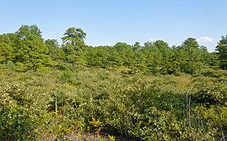 Albany Pine Bush - Image: Albany Pine Bush landscape