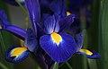 All Blue (8192720428).jpg