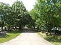 Alley in the New Cemetery of Gyömrő, Hungary.jpg