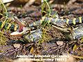 Alligator Baby 5.jpg