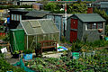 Allotment's in Prince of Wales Road, Holyhead (1).jpg