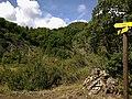 Alpes Haute-Provence Digne Col Jas Ichtyosaure - panoramio.jpg