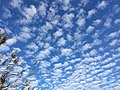 Altocumulus cloud formation.jpg