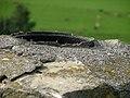 Ameisen schwärmen - panoramio.jpg