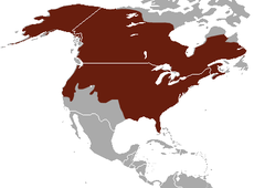 American Mink area.png