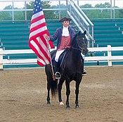 American Morgan Horse cropped.jpg