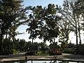 Amin al-Islami Park - Trees and Flowers - Nishapur 023.JPG