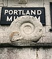 Ammonite.600pix.jpg