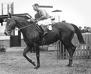 Caulfield Cup - Image: Amounis 1930 VATC Futurity Stakes Jockey Harold Jones Trainer Frank Mc Grath