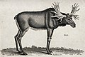 An elk with large antlers. Etching by Heath. Wellcome V0021212.jpg