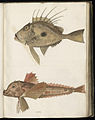 Animal drawings collected by Felix Platter, p1 - (150).jpg