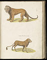 Animal drawings collected by Felix Platter, p2 - (45).jpg