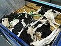 Animal live export on planes israel 01.jpg
