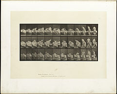 Animal locomotion. Plate 264 (Boston Public Library).jpg