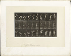 Animal locomotion. Plate 304 (Boston Public Library).jpg