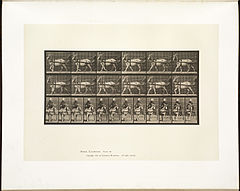 Animal locomotion. Plate 677 (Boston Public Library).jpg