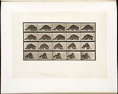Animal locomotion. Plate 745 (Boston Public Library).jpg