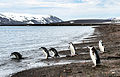 Antarctica 2013 Journey to the Crystal Desert (8369536105).jpg
